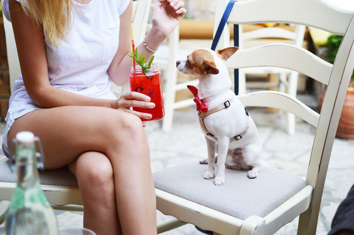 Sydney's dog friendly cafes you musttry